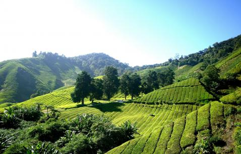Adventure Activities in Cameron Highlands