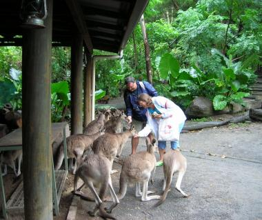 Cairns Tropical Zoo Tours