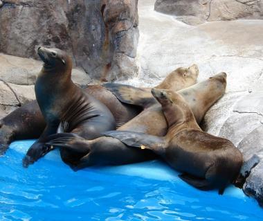 San Antonio Zoo And Aquarium Tours