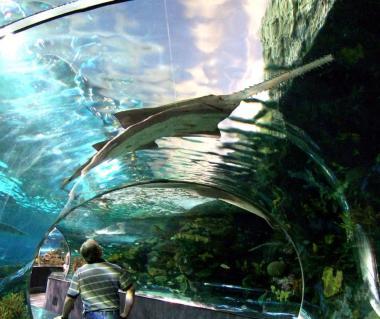 Ripley's Aquarium Tours