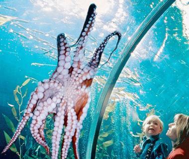 Aquarium Of The Bay Tours