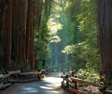 Muir Woods National Monument Tours
