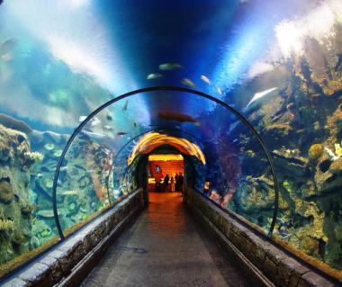 Shark Reef At Mandalay Bay Las Vegas Ticket Price