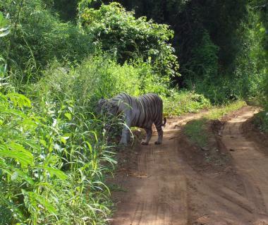 Sanjay Gandhi National Park Tours