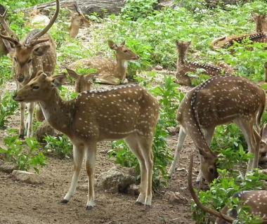 Nehru Zoological Park Tours
