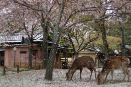 Nara, Nara, Japan