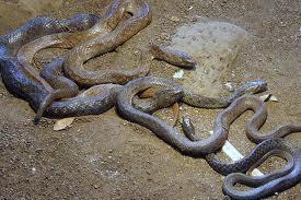 Katraj Snake Park Image