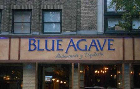 Blue Agave Image