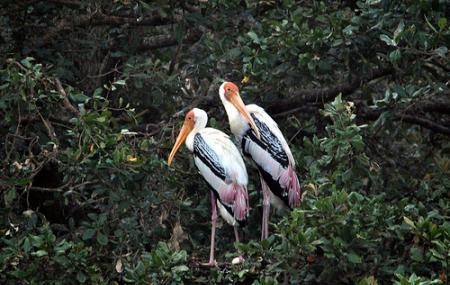 Vedanthangal Bird Sanctuary Image