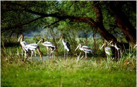 Bharatpur Bird Sanctuary Image
