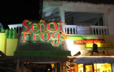 Senor Frog Image