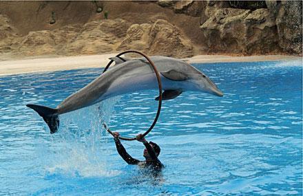 Dolphinland Image