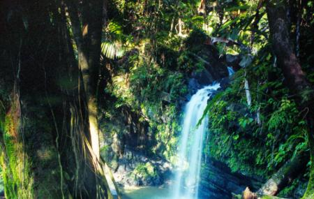 El Yunque National Forest Image