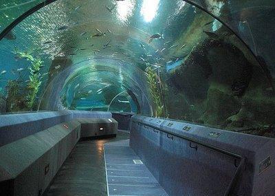 National Aquarium Of New Zealand Image