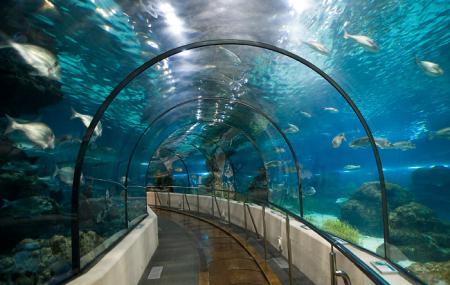 Barcelona Aquarium Image