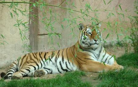 Hanover Zoo Image
