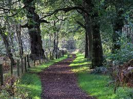 Sherwood Forest Country Park Image