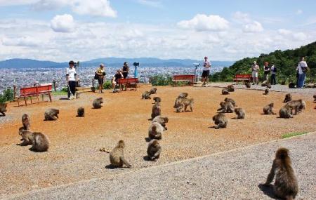 Iwatayamamonkeypark Image