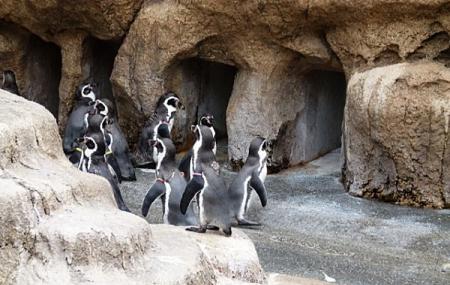 Nagasaki Penguin Aquarium Image