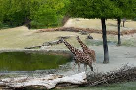 Brno Zoo Image