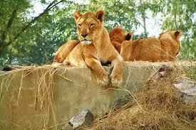 Lahore Safari Park Image