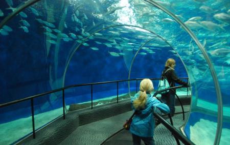 Shanghai Ocean Aquarium Image