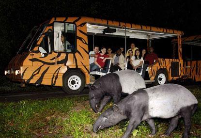 Night Safari Image