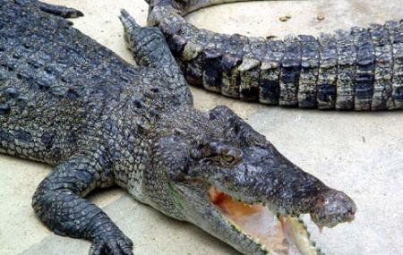 Singapore Crocodilarium Image