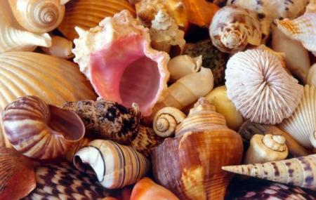 Alice Garg National Seashell Museum Image