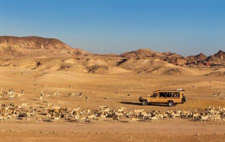 Arabian Wildlife Park Image