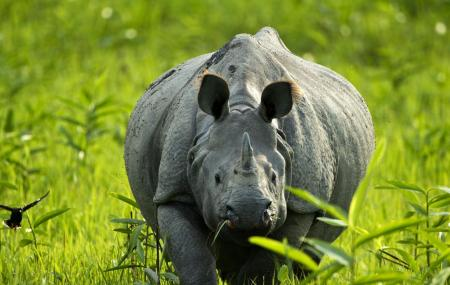 Kaziranga National Park Image