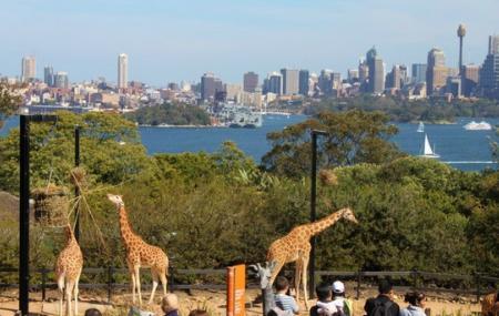Taronga Zoo Image