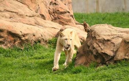 Johannesburg Zoo, Johannesburg