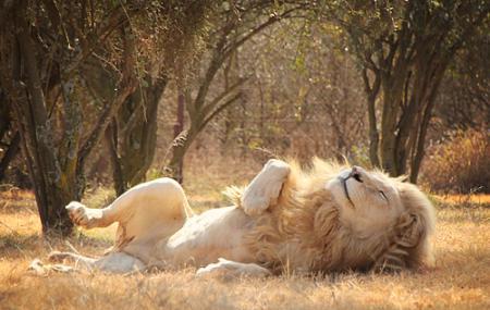 Lion Park Image