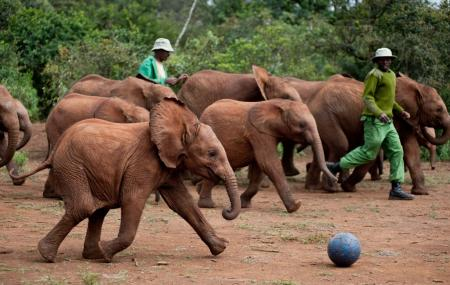 David Sheldrick Wildlife Trust Or Sheldrick Elephant Orphanage Image