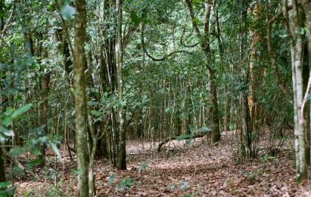 Karura Forest Reserve Image