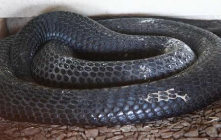 Snake Park Image