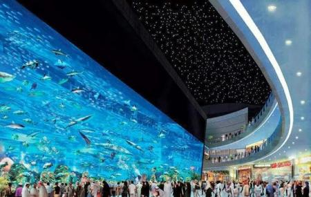 The Dubai Mall Aquarium Image