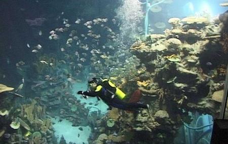 Guangzhou Ocean World Image