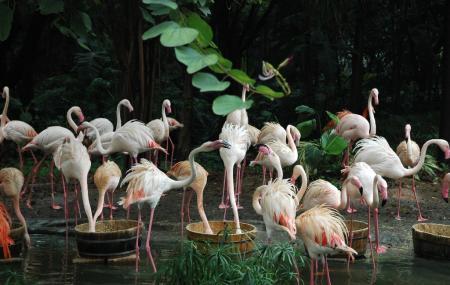 Xiangjiang Safari Park Image