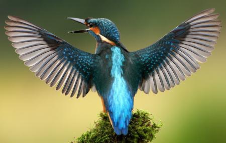 Salim Ali Bird Sanctuary, Panaji