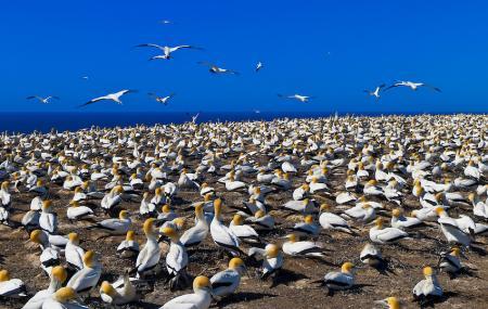 Cape Kidnappers Gannet Reserve Image