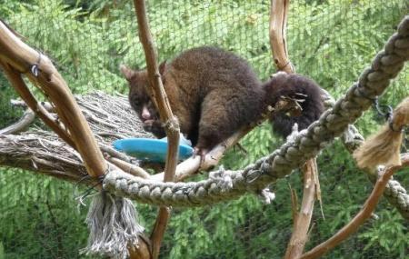 Kiwi Birdlife Park Image