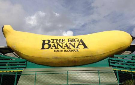 The Big Banana Image