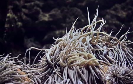 Rhodes Aquarium, Rhodes