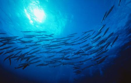 Kaikoura Marine Aquarium Image