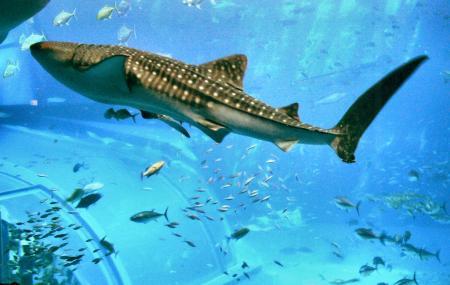 Okinawa Churaumi Aquarium Image