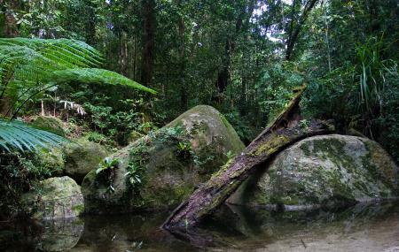 Daintree Rainforest National Park Image