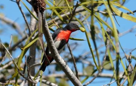 Broome Bird Observatory Image