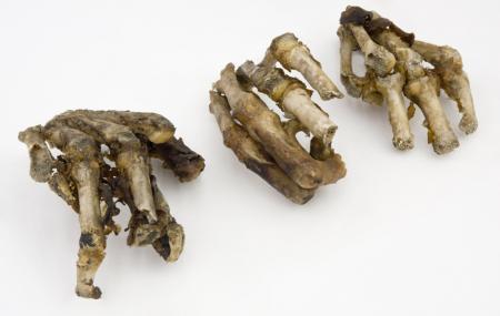 Neanderthal Museum Image